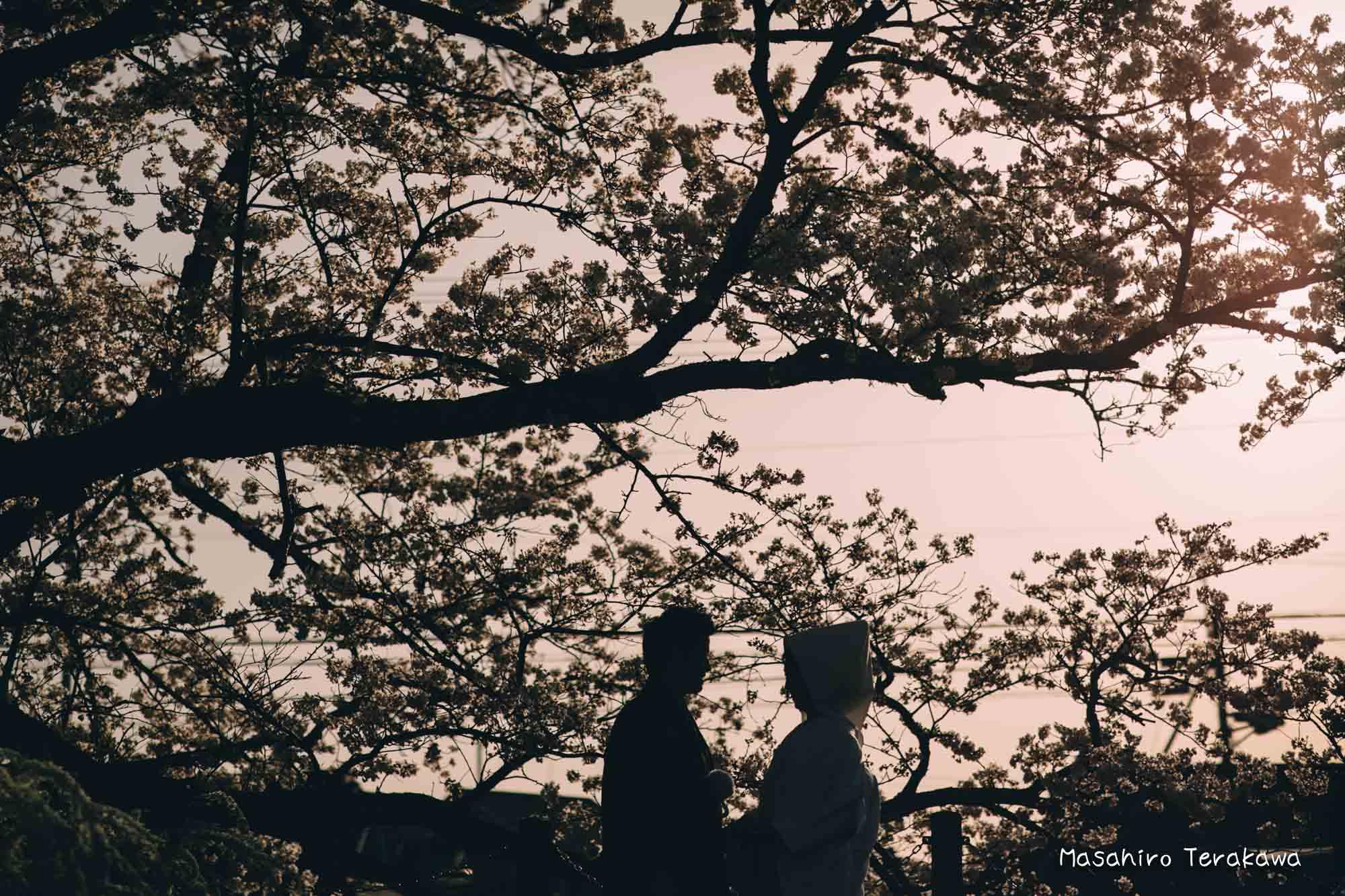 桜前撮り18